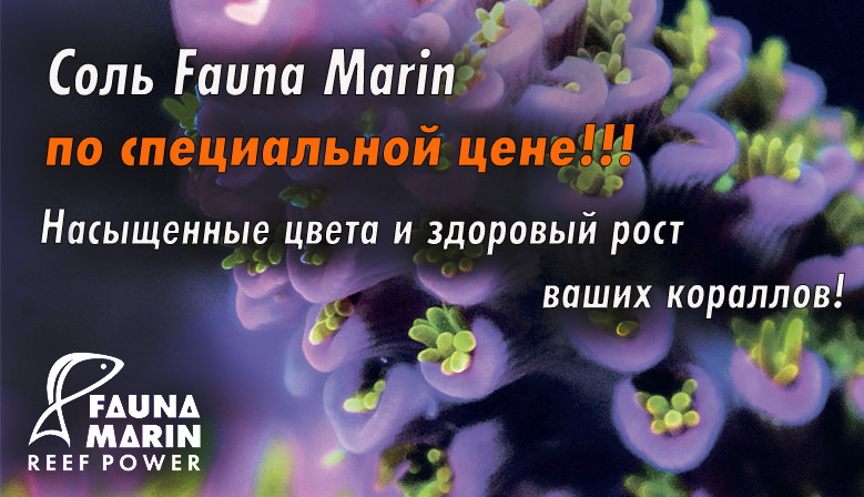 Fauna Marin salt